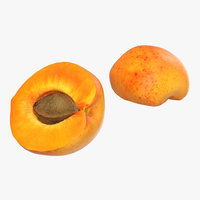 3d model of apricot cross section