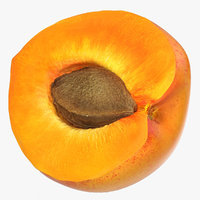 apricot cross section 2 obj