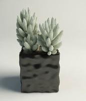 3d model cactus pot interior