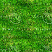 Mossy ground 5