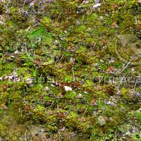 Mossy ground 8