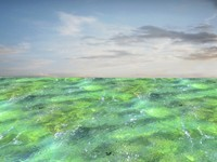 Shallow water 1