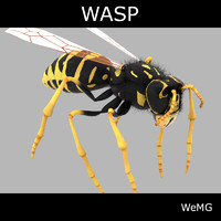 3d realistic wasp