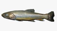trout fish 3d model
