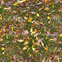 Grass with autumn leaves 7