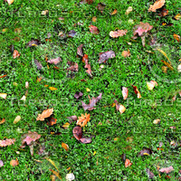 Grass with autumn leaves 4