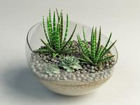cacti glass vase max