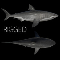 3d white shark rigged model
