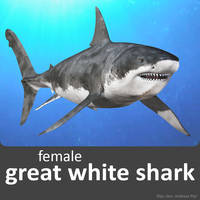 realistic female great white 3d model