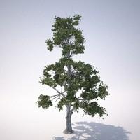 3d model rn tree 1