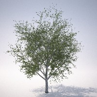 rn tree 2 3d model