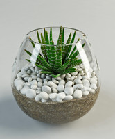 3d model cacti glass vase