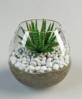 3d model cacti glass vase