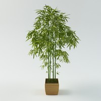 3d bamboo palm