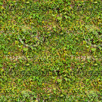 Grass with clover 4