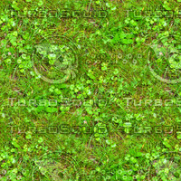 Grass with clover 7
