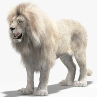 3d model lion white fur