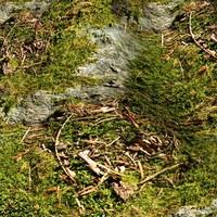 Mossy rock 2