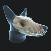 reynard skull 3d model