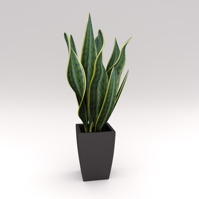 SE_PlantPot03.jpg
