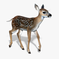 3d model fawn baby deer rigged