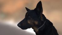 3D Scanned Dog - Alsatian