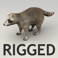 maya rigged raccoon