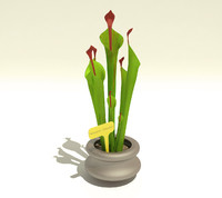 3d model carnivorous plant