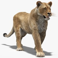max lioness rigged fur animation