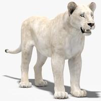 3d max lioness white