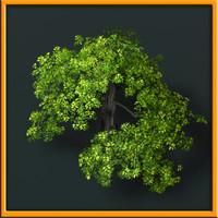 3d ash tree - model