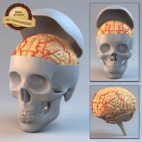 maya brain skull