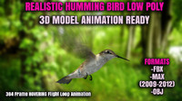 Humming Bird 3D Low Poly Realistic Animated Model