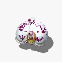 White Flower Texture