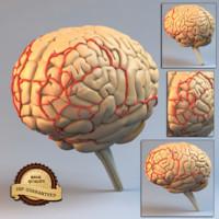 maya brain head