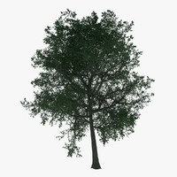 3d tree 2 model