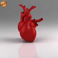 3d model of anatomy medical