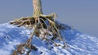 max roots snow