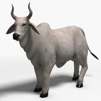 max brahman bull