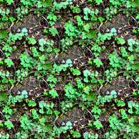 Forest ground 10
