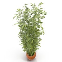 3d model green bamboo bush