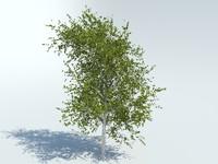realistic aspen tree 3d max
