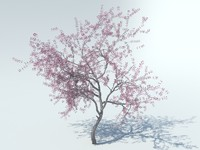 3d model of realistic sakura tree