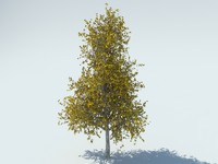 3d model realistic aspen tree