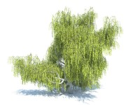 realistic willow tree 3d model