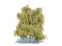realistic willow tree 3d max