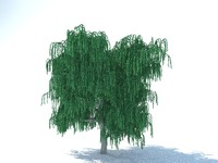 free realistic willow tree 3d model