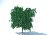 Tree willow