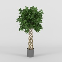3d ficus tree model