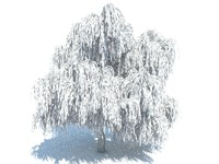 3d model of realistic willow tree